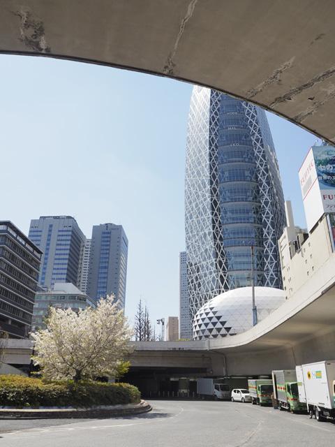 新宿西口の桜と高層ビル